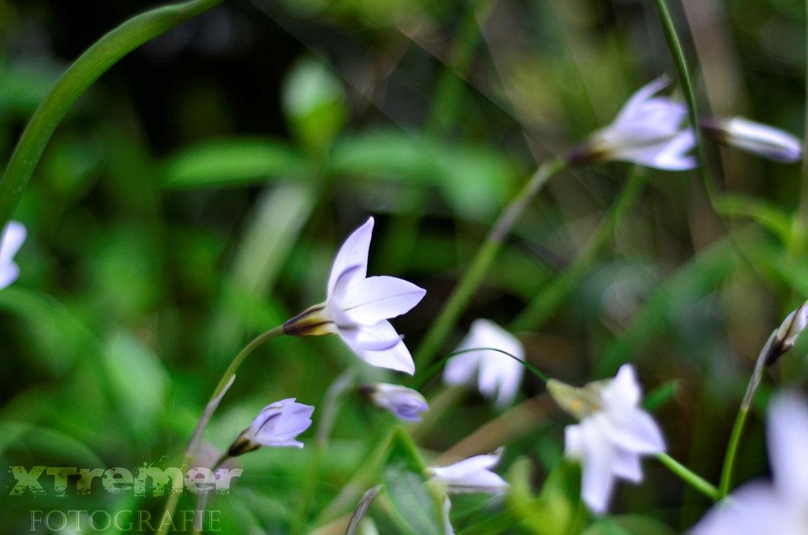 Diversen Bloemen 1