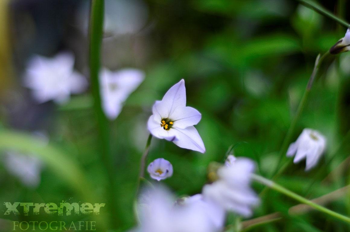 Diversen Bloemen 2