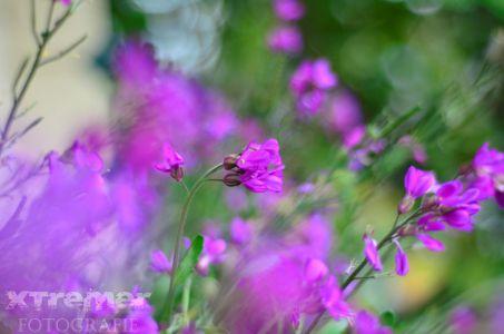 Diversen Bloemen 3