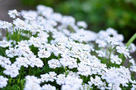 Diversen Bloemen 4